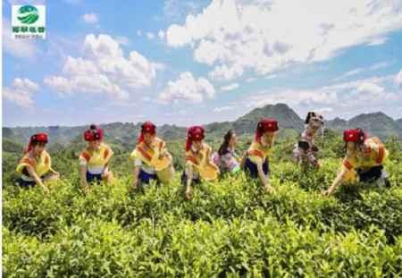 贵州有机红茶绿茶厂家供应