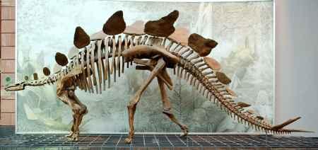 恐龙骨架模型厂家